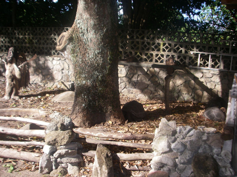 The enclosure with giant tortoises